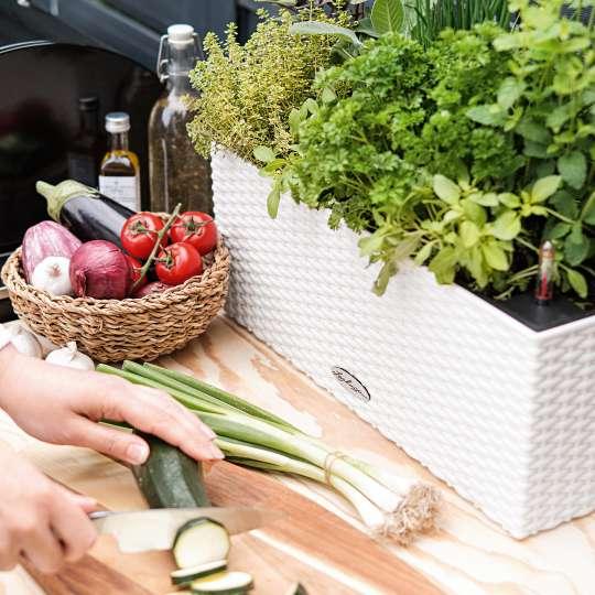 LECHUZA - BALCONERA Cottage 50 weiß - Gemüse und Kräuter