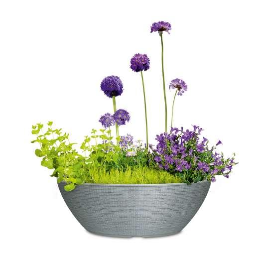 Scheurich BARCEO Jardiniere Stony Grey bepflanzt - Freisteller