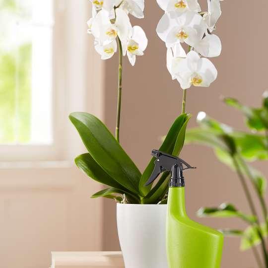 Scheurich - Smilla - Sprayer Grün - Orchidee