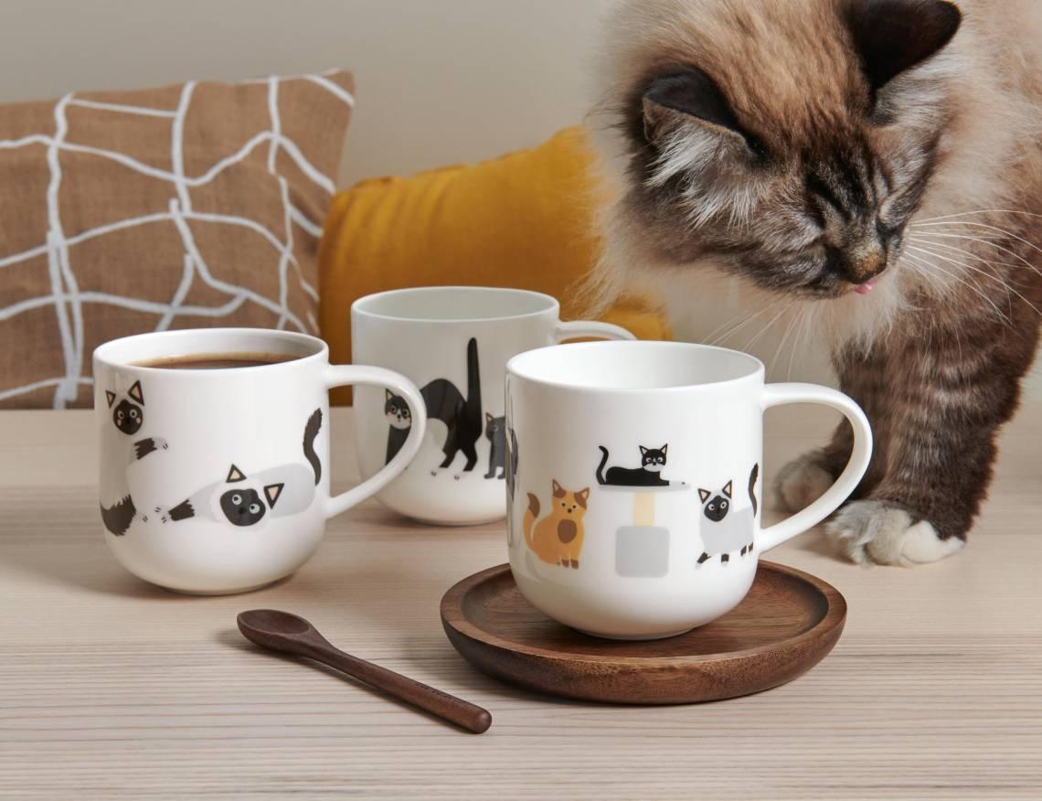 ASA-Coppa-Cats-Dogs-Various-Cats