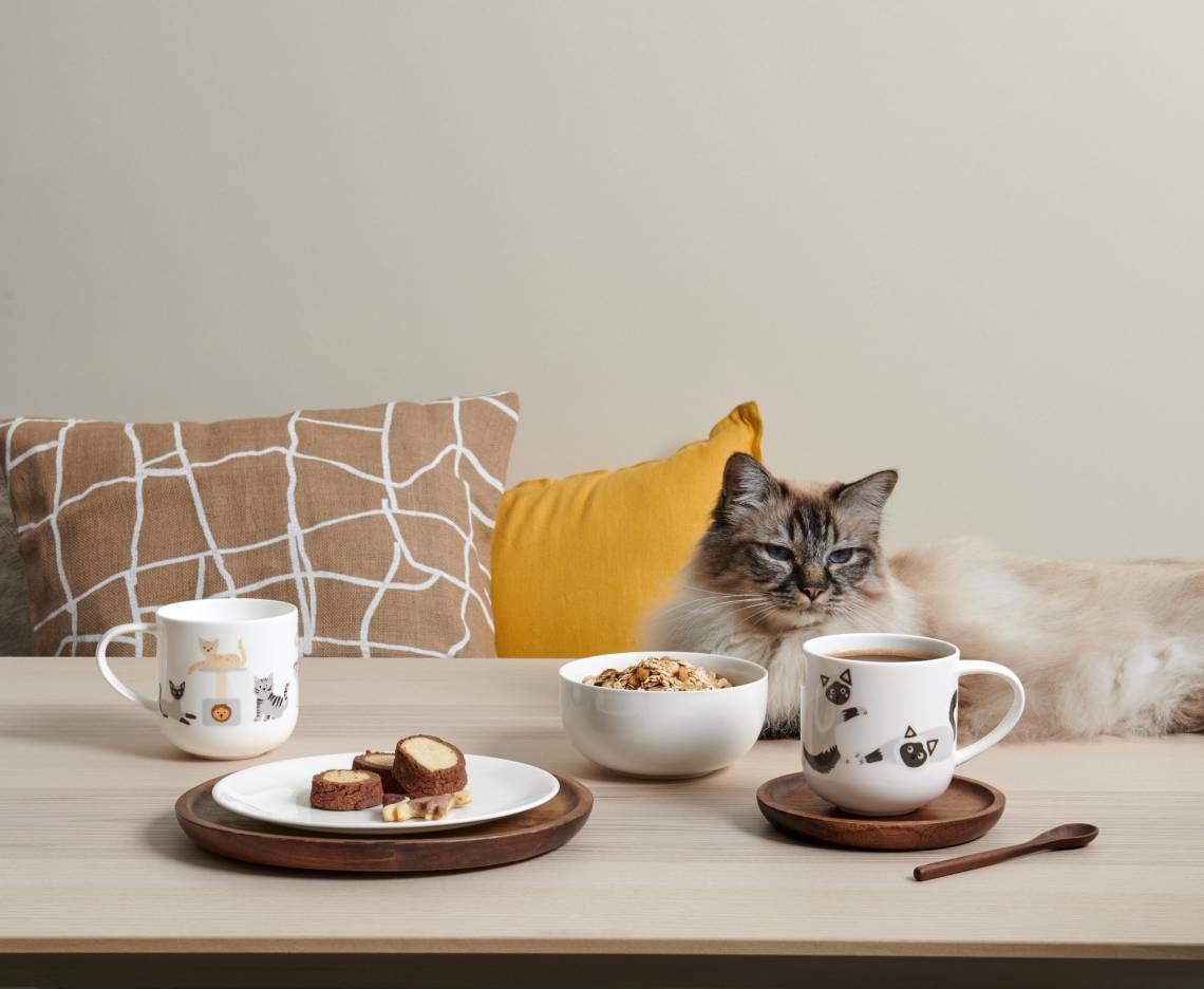 ASA-Coppa-Cats-Dogs-Various-Cats2