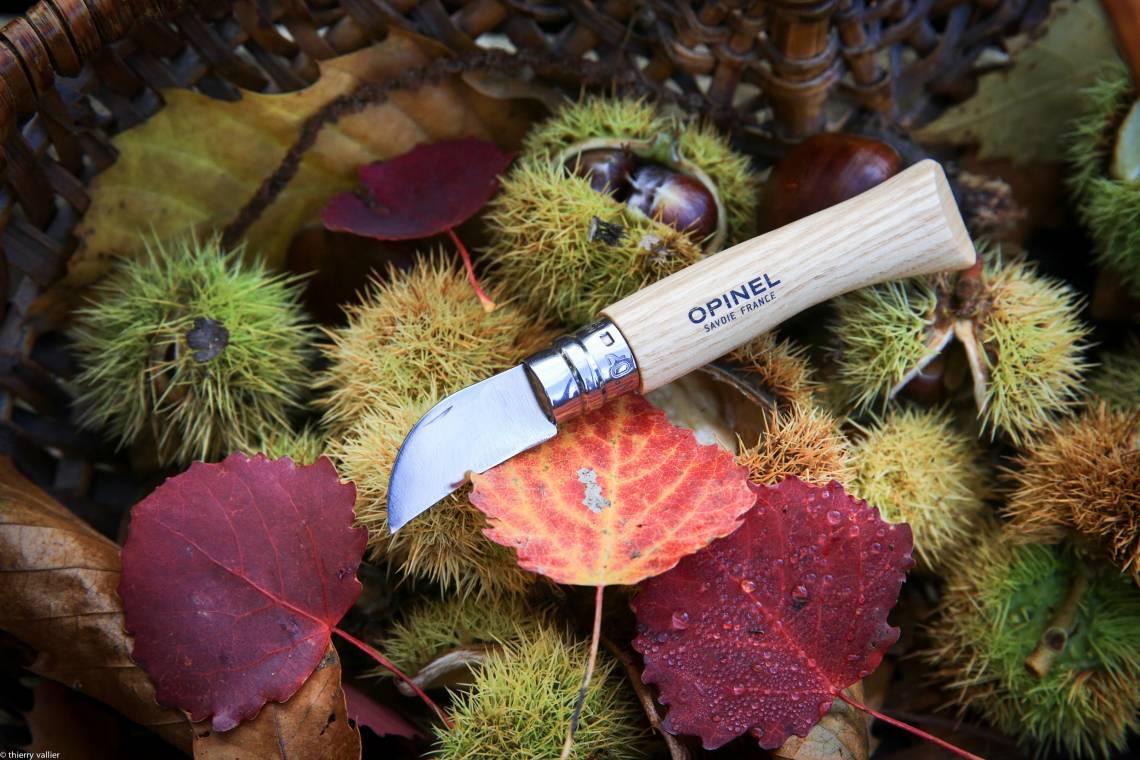 Opinel Kastanienmesser im Wald mit Blättern