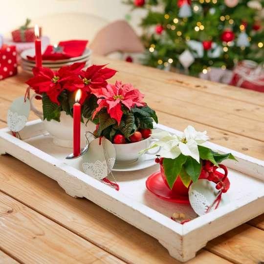 Weihnachtsstern  3