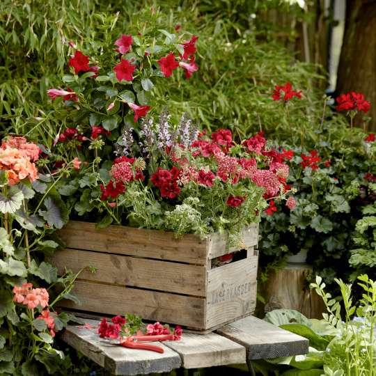 Mit Langzeitdünger vorgedüngte Blumenerde erleichtert die spätere Pflege.