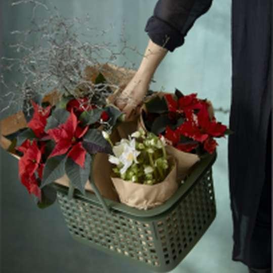 Bild 4 - Poinsettia Christmas Woodland