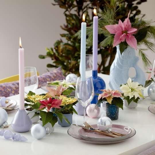 Bild 5 - Poinsettia Candy Colour Christmas