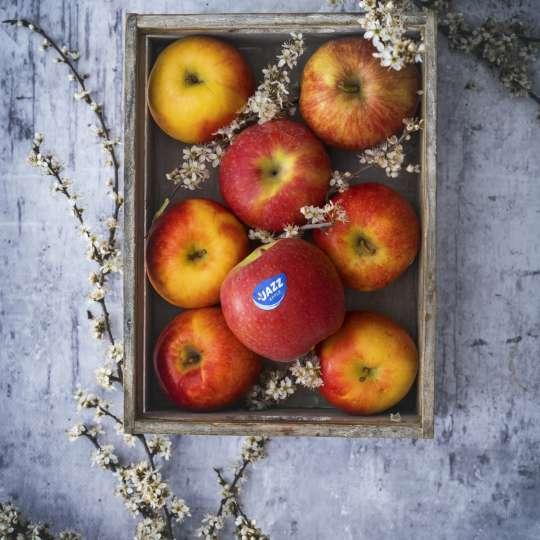 JAZZ Äpfel - Patrick Rosenthal