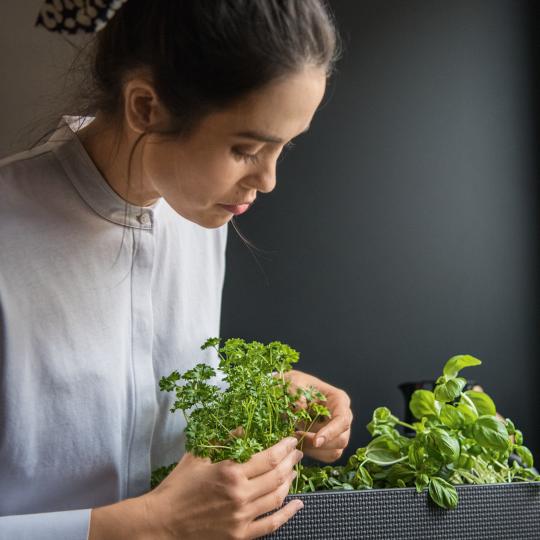 Lechuza: Frau pflanzt Kräuter ein