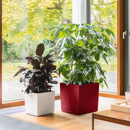 Lechuza: Green up your home! Grün macht glücklich! Cube weiss 30 und rot 40