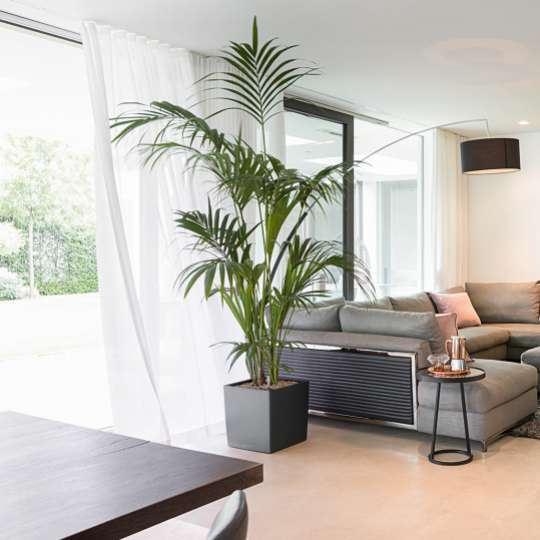 Lechuza: Green up your home! Grün macht glücklich! Cube anthrazit 40
