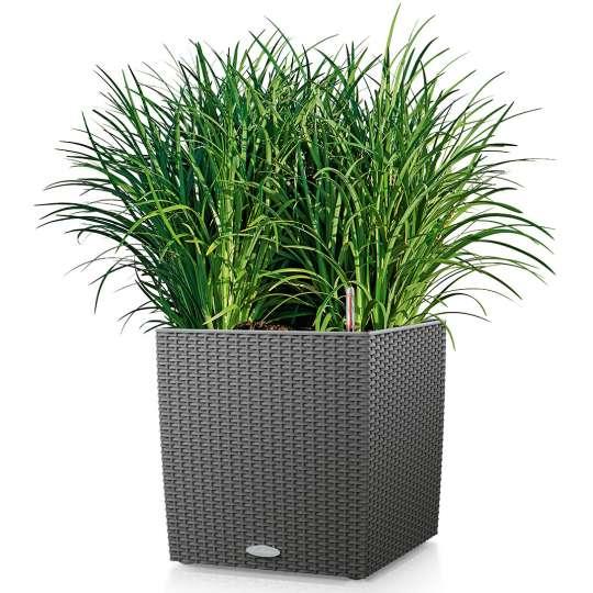 Pflanzkübel CUBE COTTAGE mit grüner Pflanze