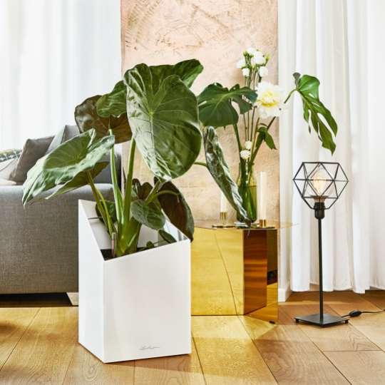 Lechuza: Green up your home! Grün macht glücklich! Cursivo 40, weiss
