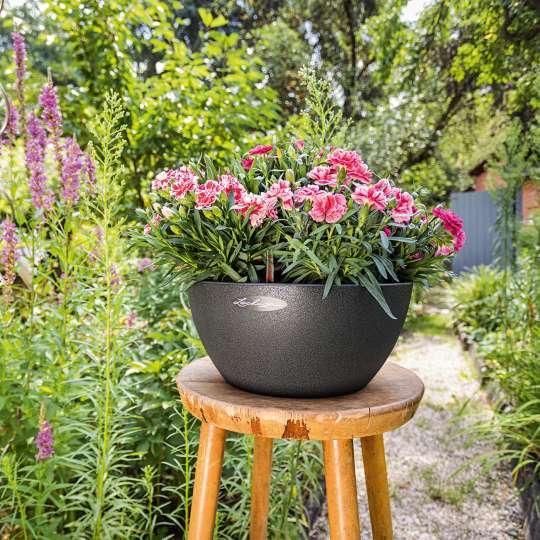 Blumenschale RUSTICO mit Pflanze