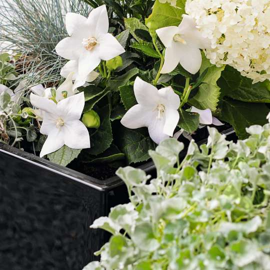 Black & White: Eleganter SchwarzWeiß-Look  Blumen