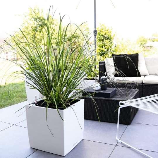 Black & White: Pflanzgefäss weiss