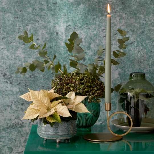 cremefarbene  Weihnachtssterne - Modernes Green-Living mit einem Hauch von Vintage