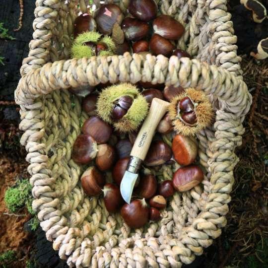 Opinel Kastanienmesser im Wald und Korb mit Kastanien
