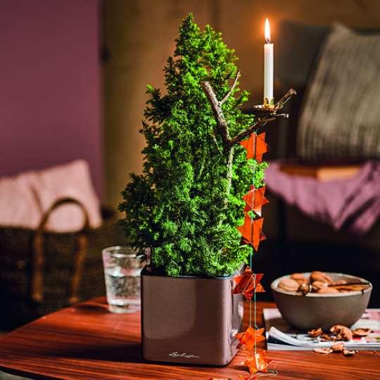 CUBE Glossy-Pflanzgefäß Weihnachten