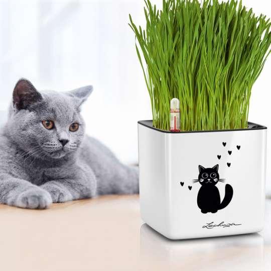 LECHUZA CUBE Glossy 14 Cat mit Katzengras