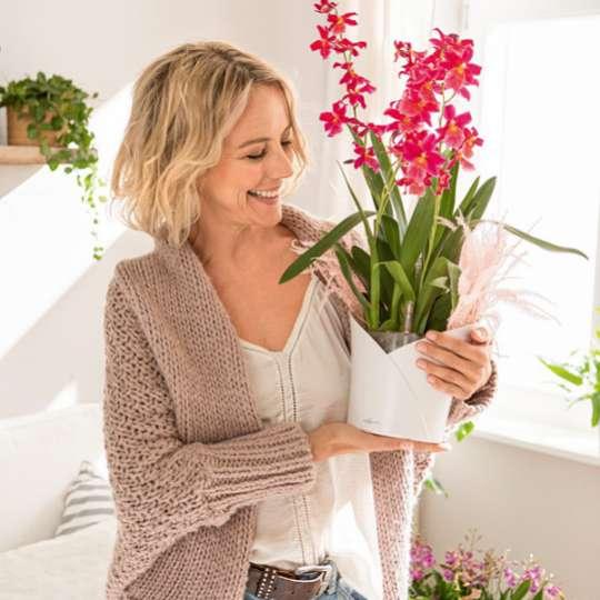 Lechuza Gefäß Orchidea