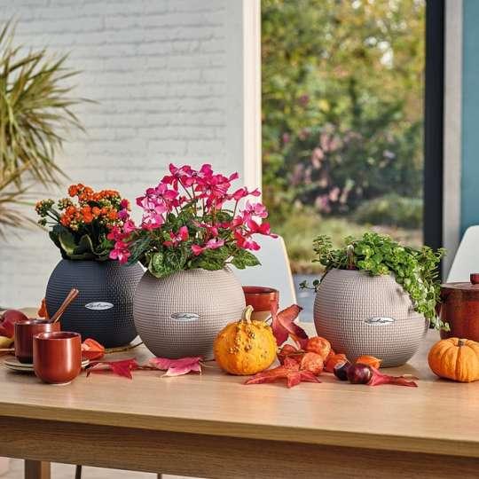 LECHUZA – Stilvolle Herbstdeko für Ihr Zuhause