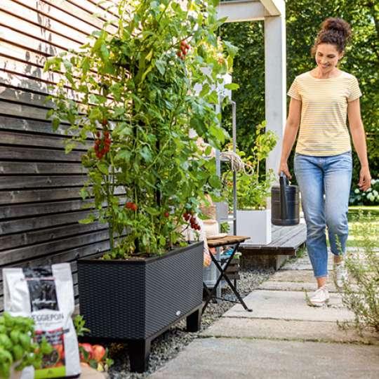 Tomaten in Pflanzengefäß Trio Cottage granit